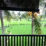 Green Field Hotel and Bungalows Foto
