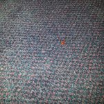 cockroach on carpet near bathroom