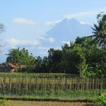 Mt. Merapi, as seen just outside our cottage