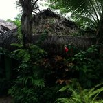 ภาพถ่ายของ La Posada Private Jungle Bungalows