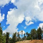 Blue Sky, White cloud, green trees and colorful flowers