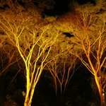 Flames of the Forest, more illuminated trees