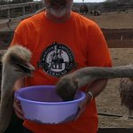 visit to the ostrich farm