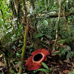 Foto de Lupa Masa Rainforest Camp