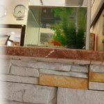Yousif Bader take this photo ..fish in the reception