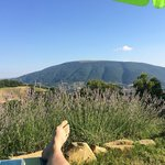 Foto Bed and Breakfast Le Ginestre