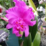 Orchid flower show
