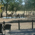 Waterhole with zebra