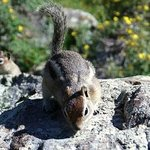 Squirrels at Williams Lake