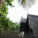 Payung Guesthouse照片