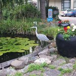 Heron outside the hotel reception