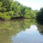 Kayaking in the mangrove tunnel