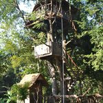 Rabeang Pasak Tree House Resort의 사진