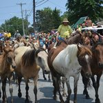 Pony March in front of Toms Cove