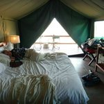 Our safari tents