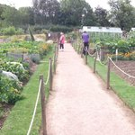 Barnsdale allotments
