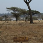 Ndutu Safari Lodge照片