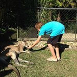 Getting to feed the kangaroos!