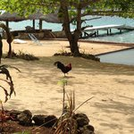 'Beach', pool, rooster and wharf