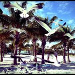 Photo de Crandon Park Beach