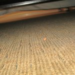 crumbs under the bed