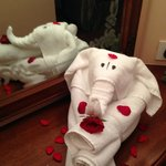 Vijay's Amazing Towel Elephant!