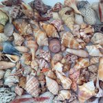 A few sea treasures