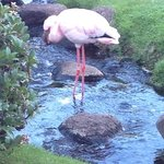Flamingo in the Garden