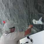 Captain Brown (Captain Jack as I called him, best guide pulling in the bullnose shark.. Thanks C