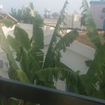 Banana tree outside balcony