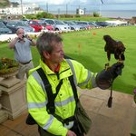 Hawk operator to deter seagulls