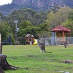 Photo of Grampians Motel Halls Gap