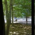 Deer out our window