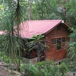 Rainforest cabin