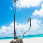 amazing tree on the private beach