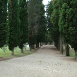 Cedar lined road to chapel at the hotel