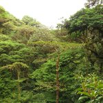 Photo of Monteverde Cloud Forest Biological Reserve
