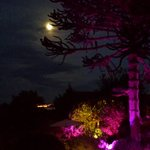 Moonlight in the garden :)
