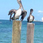 We felt as relaxed as these 2 we found hanging out at one of the hotel's piers!