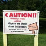 Warning, the pool has a gator.  Do not feed.
