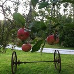 Apples at Apple Knoll Inn