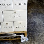 Andre from Dominique Portet