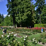 Rose garden at Washington Park