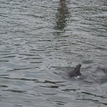Dolphins outside the pool area