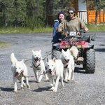 Summer training of Arctic Chalet sled dogs