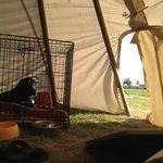 Tipi morning