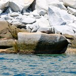 Sea lions at the preserve