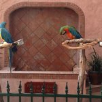 Hotel Parrots!! (Can't remember their names).