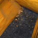 The room was a little crowded with my husband and I and the hundred carpenter ants ....YUCK!!!