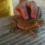 Boys loved catching a horned lizard!